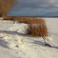 Берег в начале зимы... :: Нэля Лысенко