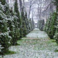 Первый снег :: Маргарита Константинова