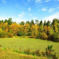 Разноцветный берег пруда :: Андрей Снегерёв