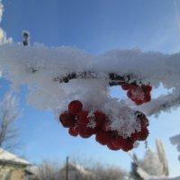 Первый день зимы. :: Алексей Кузнецов