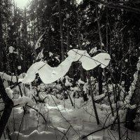 Лохнесси замерзающий :: Александр Русинов