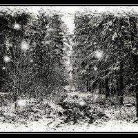 По первому снегу... :: Глeб ПЛATOB