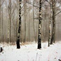 В туманном декабре :: Вячеслав Маслов
