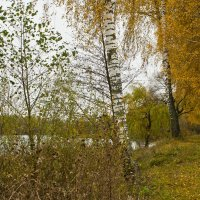 Осенняя меланхолия :: Ольга Винницкая (Olenka)