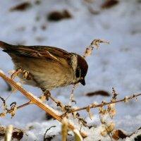 Первые зимние денёчки. :: barsuk lesnoi
