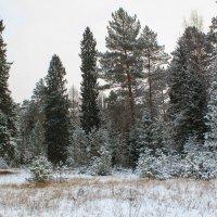 Зима :: Владимир Зеленцов