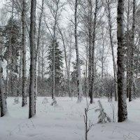 Выпадали белые снега . :: Мила Бовкун