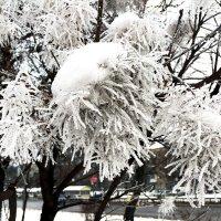 Зимы болельщик. :: Sergii Ruban