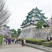 Замок Нагоя и сакура :: Swetlana V
