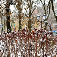 а на улице выпал снег... :: Галина