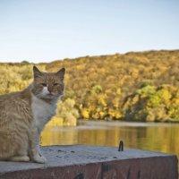 Рыжая осень,рыжий кот :: Ольга Винницкая (Olenka)