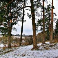 Пейзаж с соснами :: Евгений Кочуров