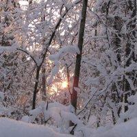 вечернее солнце :: Галина