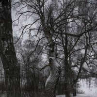 Танцующее дерево :: Александра