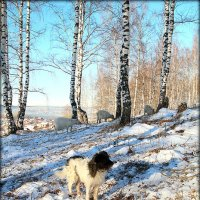 На страже. :: Александр Шимохин