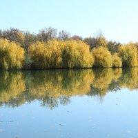 Осенних красок отражение... :: Ольга Акимова
