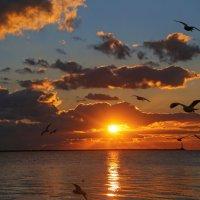 Кружили чайки в пламени заката :: Нилла Шарафан