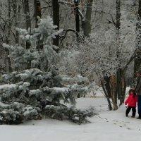 Зимние картинки.фото-1. :: Nata