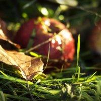 Настроение осень... :: ann-little-bird Мальцева