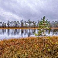 Глубокая осень :: Владимир Чуприков