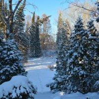 Деревья в снегу. :: Валерий Медведев