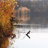 Осенняя рыбалка :: Светлана Попова