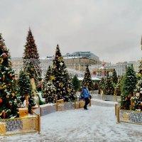 Новоголние ели на Манежной :: Olcen Len