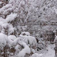 Неожиданно выпал снег :: Игорь Сикорский