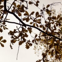 Осень :: Эльвира Сагдиева