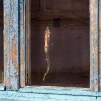 Монастырская рыба :: Татьяна Копосова
