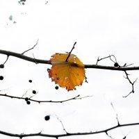 Осенний минимализм... (Былое) :: Наталья Костенко