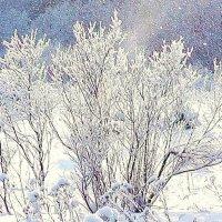 Мороз и солнце :: Александр
