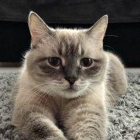 Наш котик :: Любовь
