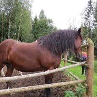 Лошадь :: Вера Щукина