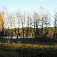 Всё замирает в ожидании зимы :: Swetlana V