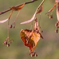 Просто это Осень :: ~ Putnik ~