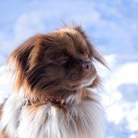 Мой верный пес) :: Юлия Рамелис