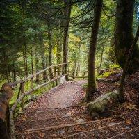 таинственный лес :: Олеся Семенова