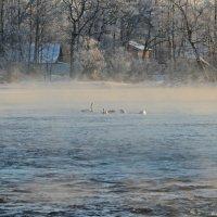 Неожиданная встреча зимой :: Ирина Ярцева