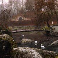 Лебеди... :: Сергей