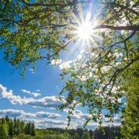 Лето на реке Ухта. :: Николай