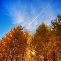 В осеннем лесу :: Сергей Шаталов