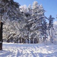 Морозно :: Наталия Григорьева