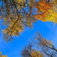 Небо октября :: Владимир Жданов