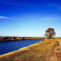 дерево :: Наталья Рублева