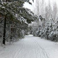 Все в лес! :: Люба