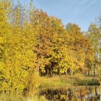 Золотая осень :: Виктория Я