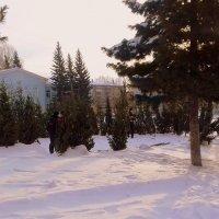 Скоро , скоро Новый год ! :: Мила Бовкун