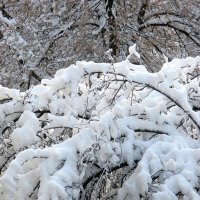Зима в городе :: Надежд@ Шавенкова