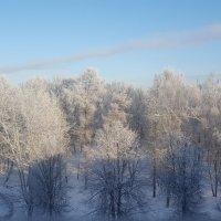 Ясный Зимний День :: Алексей Лукаев